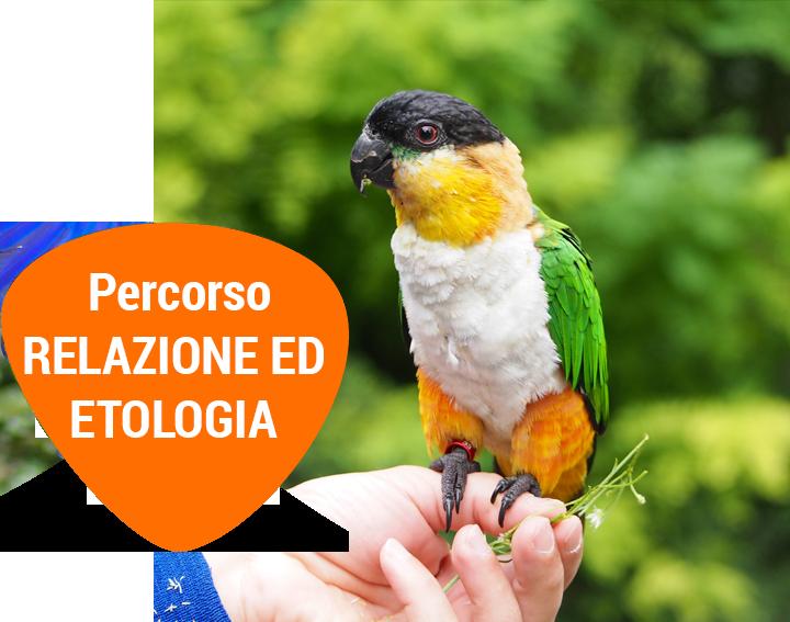 Percorsorelazione-ed-etologia-passione-pappagalli-volo-libero
