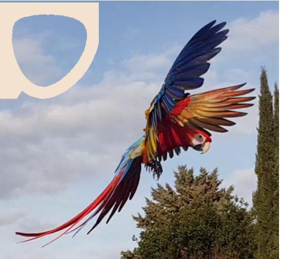 contatti-passione-pappagalli-free-flight-adesione-2
