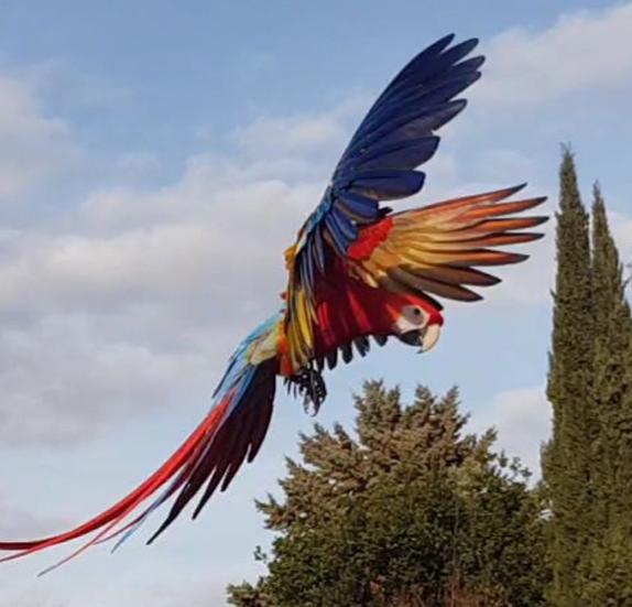 passione-pappagalli-volo-libero-descrizione