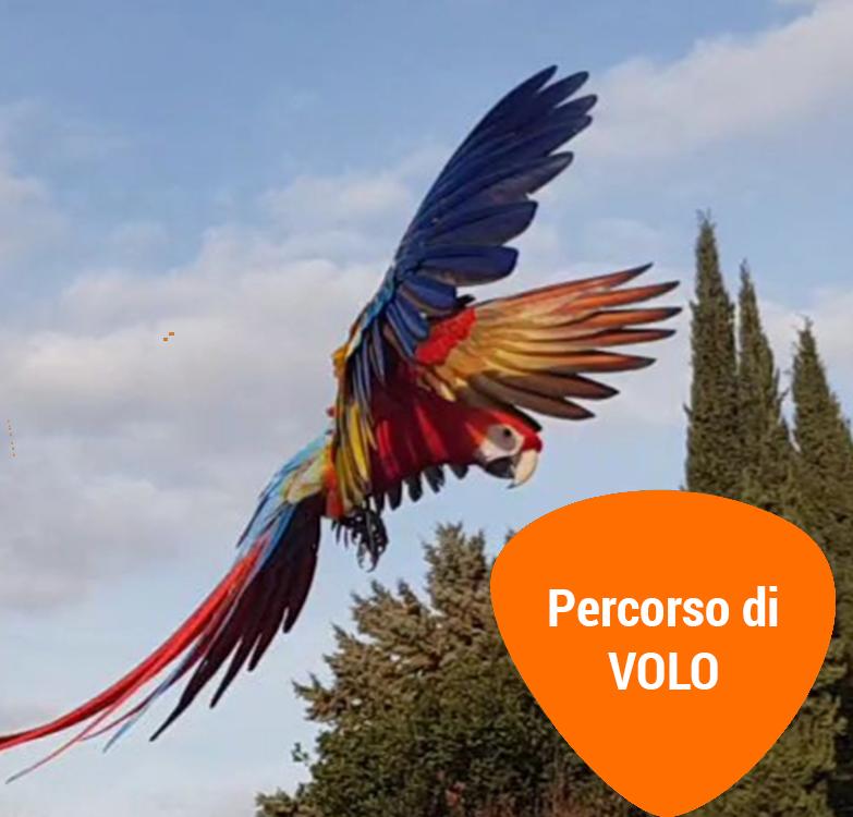 passione-pappagalli-volo-libero